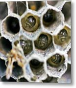 Wasp Nursery Metal Print