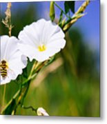Wasp On A White Flower Metal Print