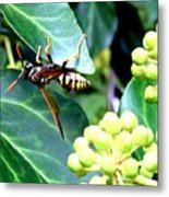 Wasp On The Ivy Metal Print