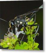 Wasp Visit Metal Print
