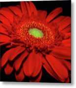 Watch Me Glow Metal Print
