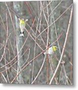 Watch Me One Bird In Flight Metal Print