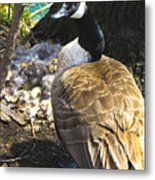 Watchful And Proud Metal Print