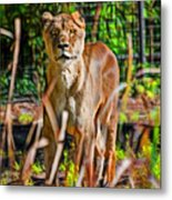 Watchful Lioness Metal Print