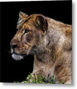 Watching Closely Metal Print
