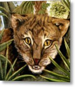 Watching  Floridabobcat Metal Print