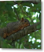 Watching From Above Metal Print
