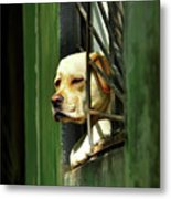 Watching From The Window Metal Print