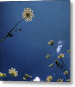 Watching The Day Float By Metal Print