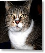 Watching You Metal Print