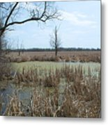 Water And Cattails Metal Print