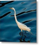 Water Bird Series 30 Metal Print