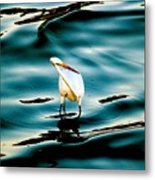 Water Bird Series 33 Metal Print