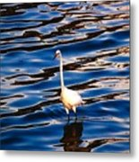 Water Bird Series 9 Metal Print