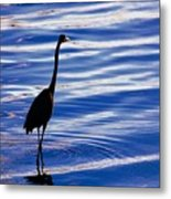 Water Bird Series Metal Print
