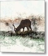 water buck in Addo Park S.A. Metal Print