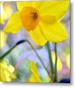 Water Color Daffodil Metal Print