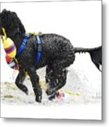 Water Dog 7 Metal Print