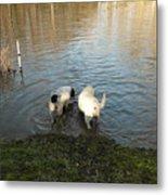 Water Dogs Metal Print