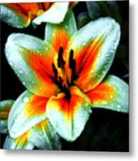 Water Droplet Covered White Lily  Metal Print