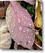 Water Drops 2 Metal Print