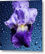 Water Drops On Purple Iris Metal Print