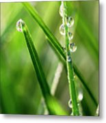 Water Drops On Spring Grass Metal Print