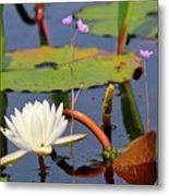 Water Flowers Metal Print