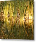 Water Grass In Sunset Metal Print