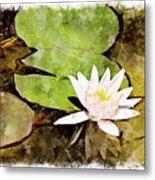 Water Hyacinth Two Wc Metal Print
