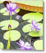 Water Lilies Metal Print