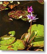 Water Lillies At Central Park Metal Print