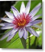 Water Lillies At Waimea I Metal Print by Elizabeth Hoskinson