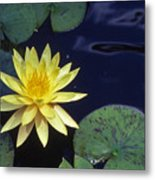 Water Lilly - 1 Metal Print