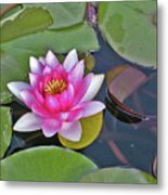 Water Lilly  And Lilly Pads Metal Print