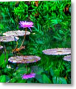 Water Lilly Metal Print by William Wetmore