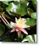 Water Lilly With Dragonfly Metal Print