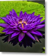 Water Lily 15-2 Metal Print