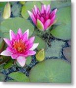 Water Lily #2 Metal Print