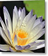 water lily 48 Green Smoke Metal Print