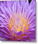 water lily 55 Ultraviolet Metal Print