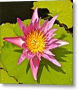 Water Lily After Rain 3 Metal Print