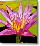 Water Lily After Rain Metal Print