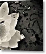 Water Lily And Fly Metal Print
