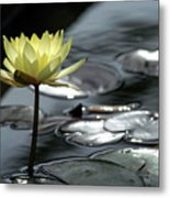 Water Lily And Silver Leaves Metal Print
