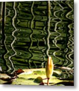 Water Lily Budd Metal Print