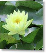 Water Lily - Burnin' Love 14 Metal Print