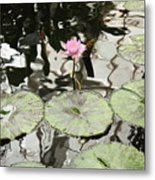 Water Lily Canvas Metal Print