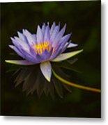 Water Lily Close Up Metal Print