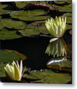 Water Lily Metal Print by Fabio Giannini